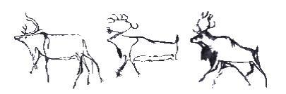 chavet-cave-reindeer