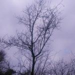 Ağacın Uykusu