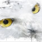 Layla ve Baykuşun Gözleri: Ekopsikoloji ve İnsan Olmak